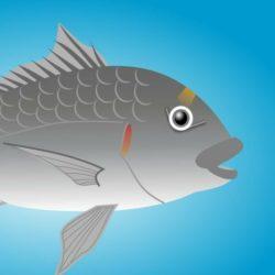 FISHING PARTENOPE